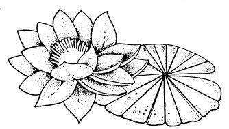 Pintar Floresflor De Loto