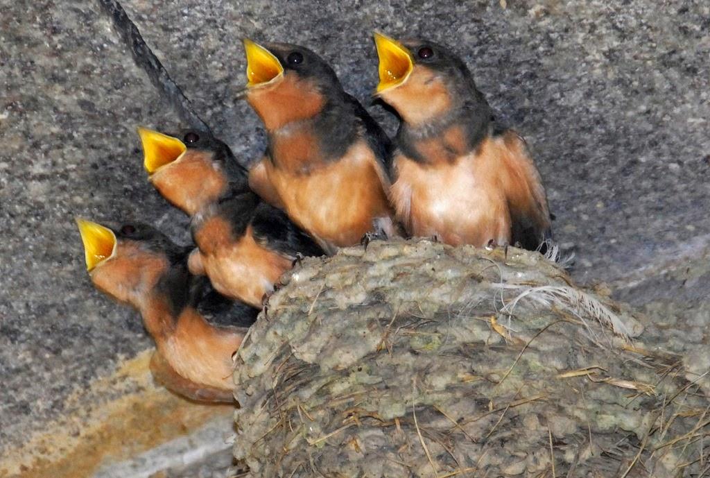 [birds-singing2.jpg]