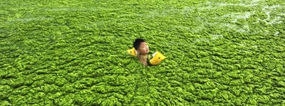boy-swimming-in-algal-blooms