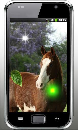 Horses Games live wallpaper
