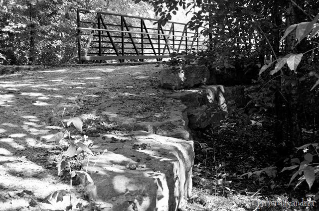 meadowvale black and white_004