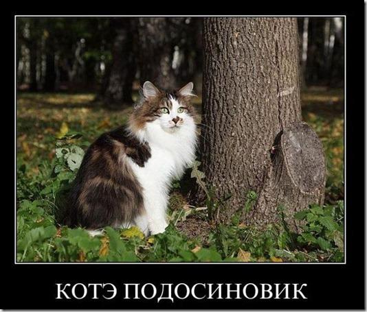 1295416026_demotivatory_27