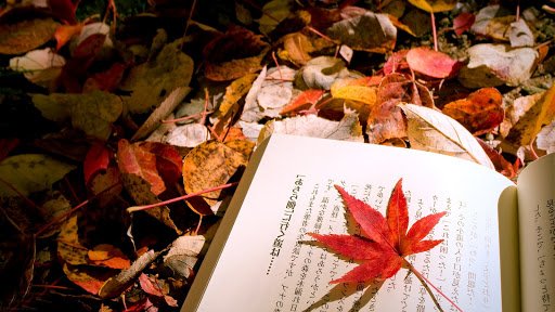 Red Leaf on a Book