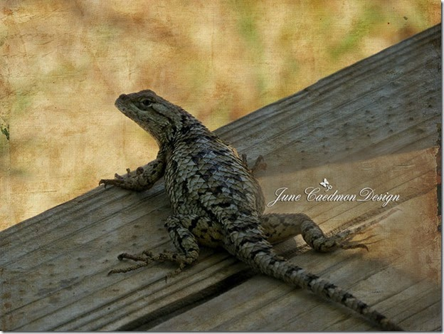 TexasSpinyLizard_scrapit