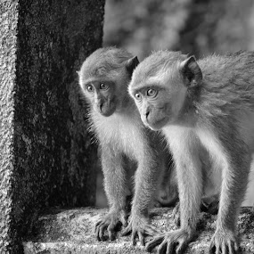 Watching by Karyn Leong - Animals Other Mammals (  )