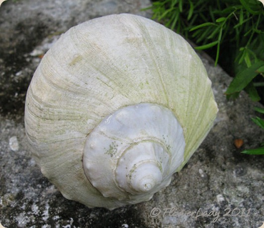 11-09-old-shell