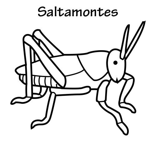 Dibujos De Saltamontes Para Colorear
