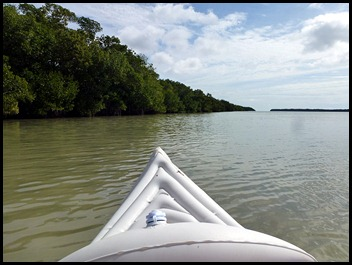 03b2 - paddled along the mangroves