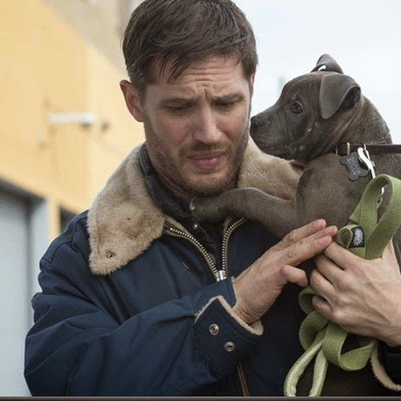 "Tom Hardy Stars in Crime Thriller ""The Drop"""
