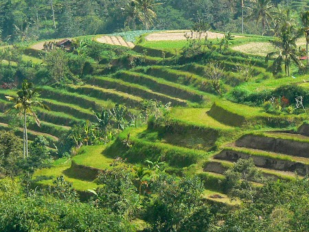 02. Orezarii supra-etajate in Bali.JPG