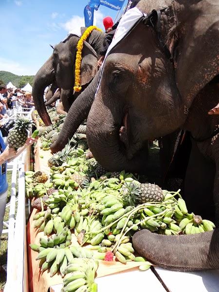 25. Hrana pentru elefanti.JPG