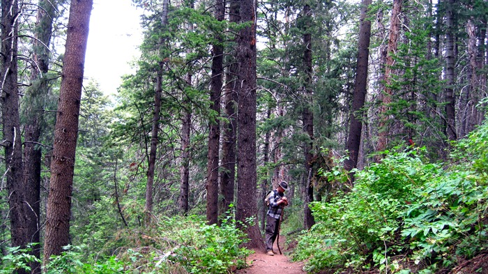 Taylor admiring the  Douglas Firs in Millcreek Canyon