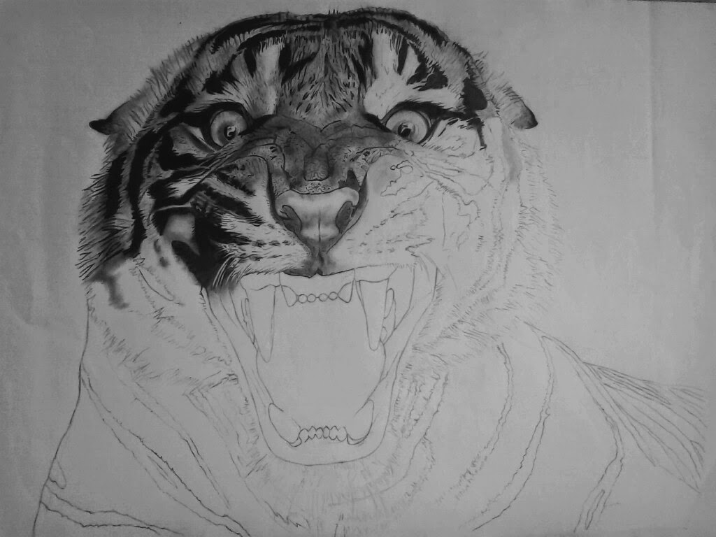 It is a picture of Enterprising Roaring Tiger Drawing
