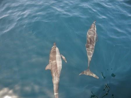 34. Delfini in mare langa vas.JPG