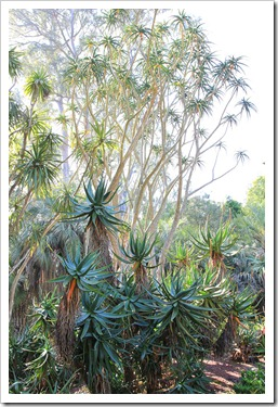 130403_Lotusland_Aloe-Garden_PM_32