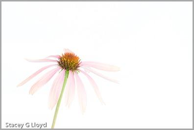 Blog_20110810_1