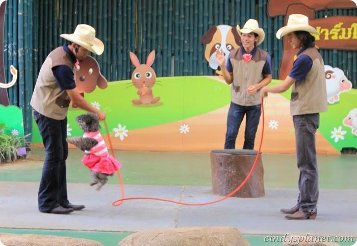 Chok Chai Farm Petting Zoo (3)