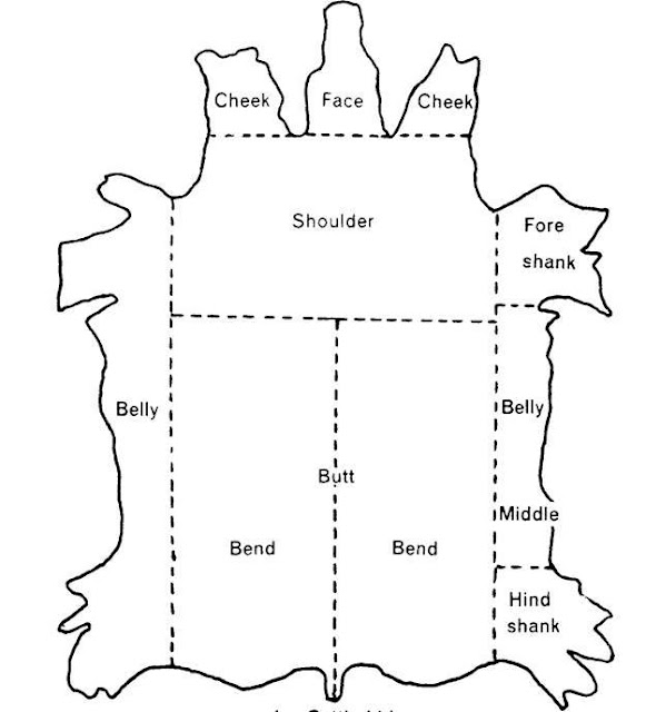 Diagram-of-Cut-Sections-of-Cattle-Hide1.jpg