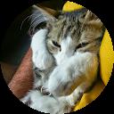 cat masson