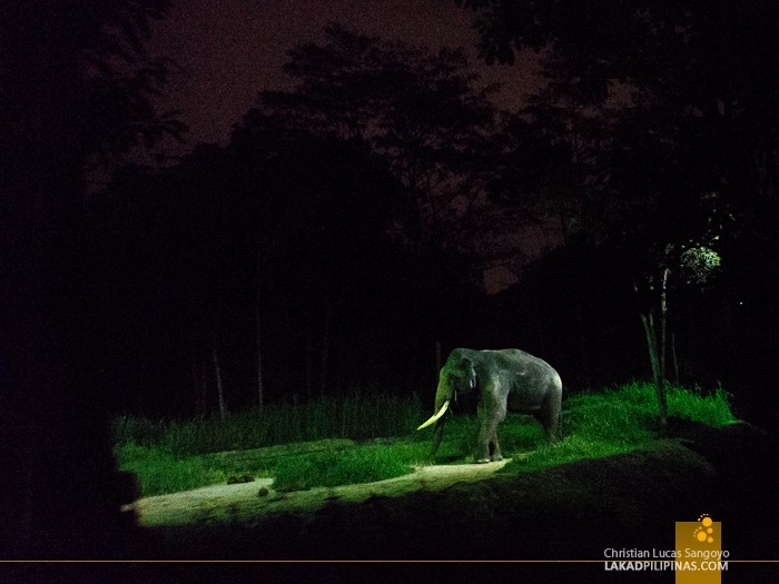 One of the oldest Elephants at Singapore's Night Safari
