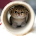 Cutie Kitty icon