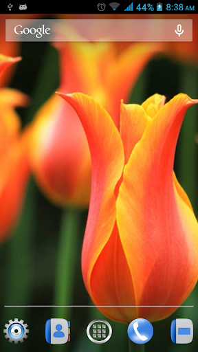 花朵動態壁紙