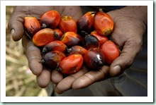 palm-oil-hand