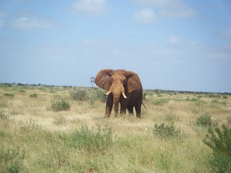 Safari Tsavo West - Kenya