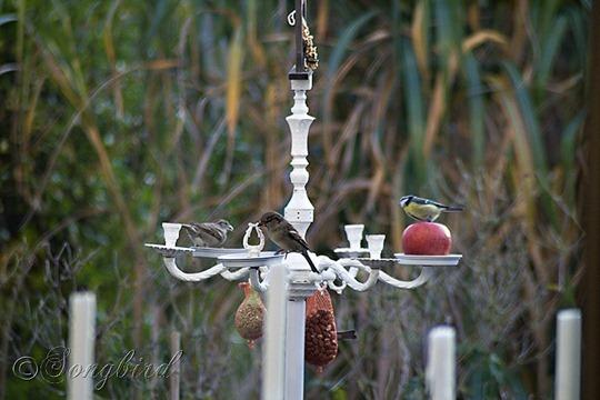 Birds on Birdfeed Chandelier 2