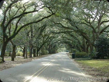A drive in Magnolia Springs Alabama