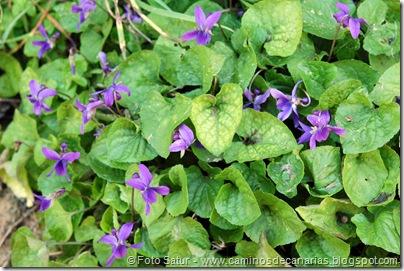 4920 Las Lagunetas-Los Arbejales(Violeta)