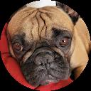 Image Google de Guizmo Doggy