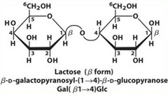 Lactose: reducing sugar