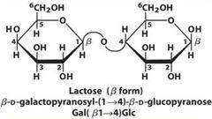 Lactose: reducing sugar