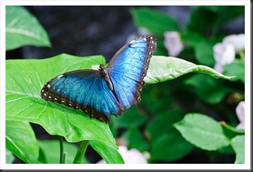 2011Aug3_Butterfly_House-20