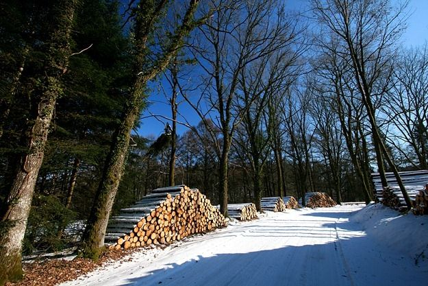 Log piles in the snow