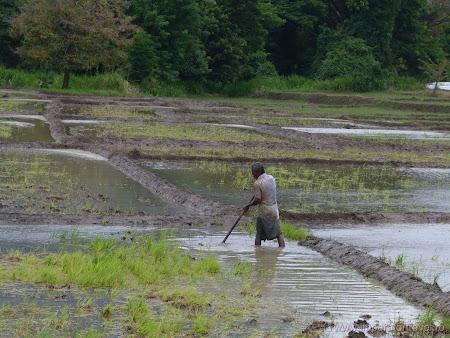 9. plantat orez.JPG