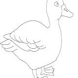 ducksmall.jpg