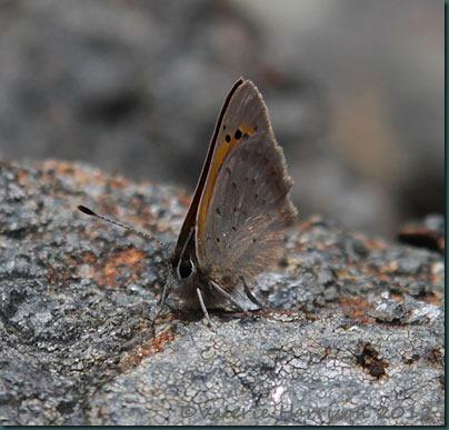 23-small-copper