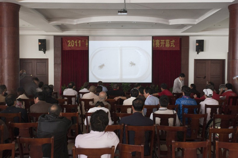 "The hall at Xilai ranch where the fights are projected onto a big screen for everyone to see. The ""Yu Sheng Cup"" Cricket fighting tournament in Chongming Island in luhua village at Xilai Ranch. Held during the National holiday and organised by the Chongming Tourist Department and local Government.  A total of 16 groups participated , the winning group is awarded a certificate and 10,000RMB (1500 USD). Groups came with crickets collected from fields across China including Shandong Province and Hebei Province."