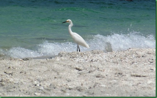 Friday Nokomis Beach (160)A
