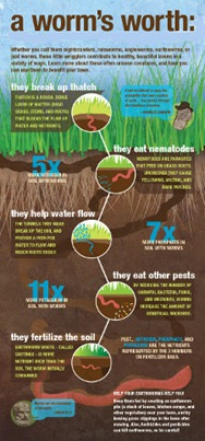 Why Earthworms are Worth Keeping Around_smal