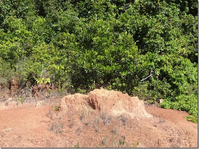 BR-319_Humaita_Manaus_Day_2_DSC05354