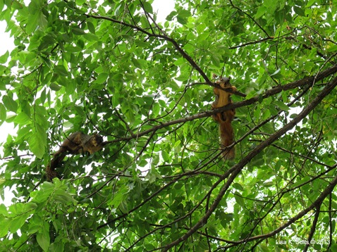 squirrels doing something in a tree