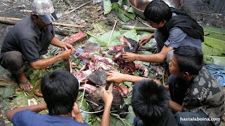 Despues de tirar al cerdo a las llamas para quemarle el pelo, se le trocea y, mezclándolo con hierbas medicinales, se introduce en caña de bambú. En el suelo se ponen unas hojas de bananera, por lo de la higiene.