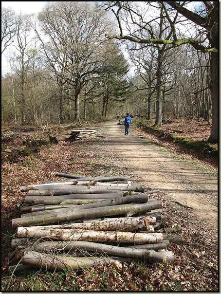 Onthe woodland walk at Scotney Castle