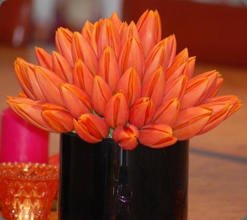 DSC_1147 planet flowers