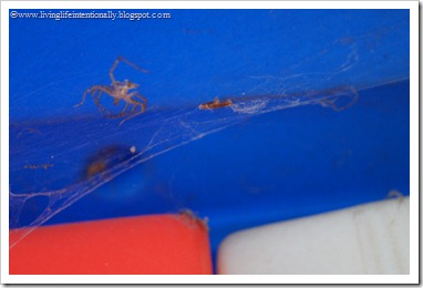 Spider Hunt Nature Activity