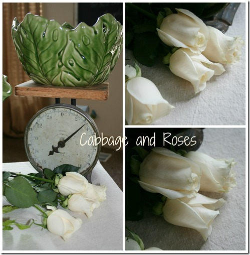 cabbage & roses