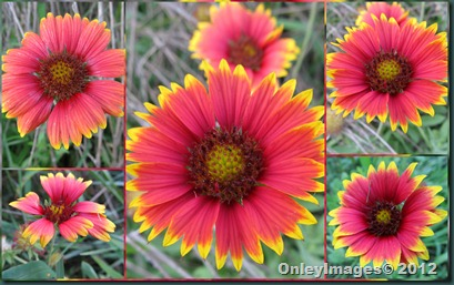 indian blanket collage